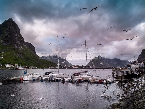 Seagulls flying over boat near moorage in Reine village, Norway Stock photo © Nejron