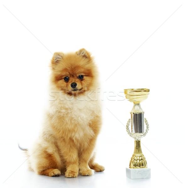 Little funny spitz with a prize Stock photo © Nejron