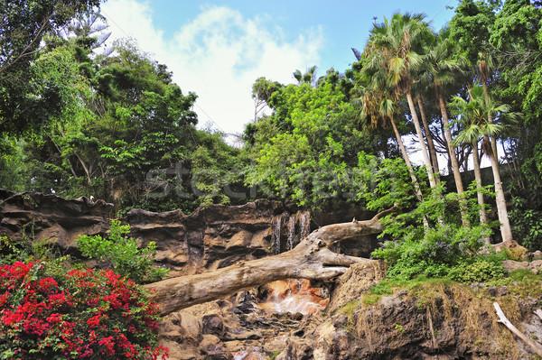Foto tropische voorjaar landschap achtergrond schoonheid Stockfoto © Nejron