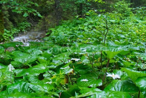 Növények esős erdő fák eső nyár Stock fotó © Nejron