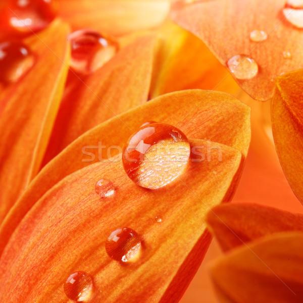 Сток-фото: оранжевый · цветок · лепестков · капли · воды · воды · текстуры