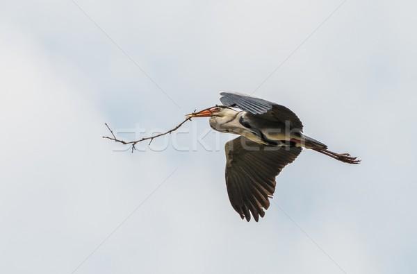 Leylek uçan şube gaga bahar ahşap Stok fotoğraf © Nejron