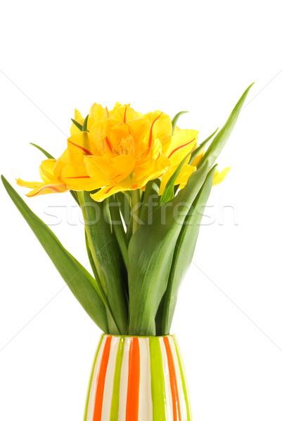 Flori Galbene Colorat Vază Izolat Alb Floare