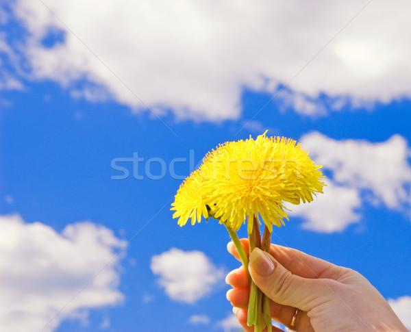 Stock fotó: Kéz · pitypangok · kék · felhős · égbolt · tavasz