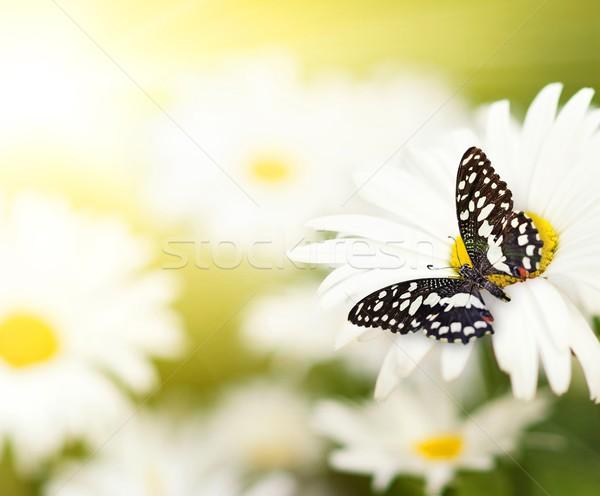 ストックフォト: てんとう虫 · 座って · 花 · 蝶 · 春 · 夏