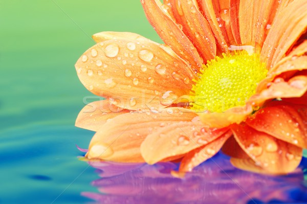 Close-up of an orange flower reflected in rendered water Stock photo © Nejron