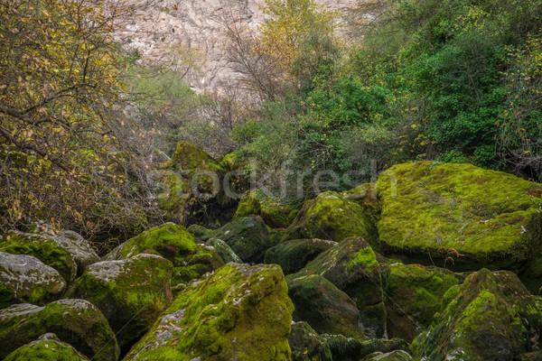 View of moss-grown rocks  Stock photo © Nejron