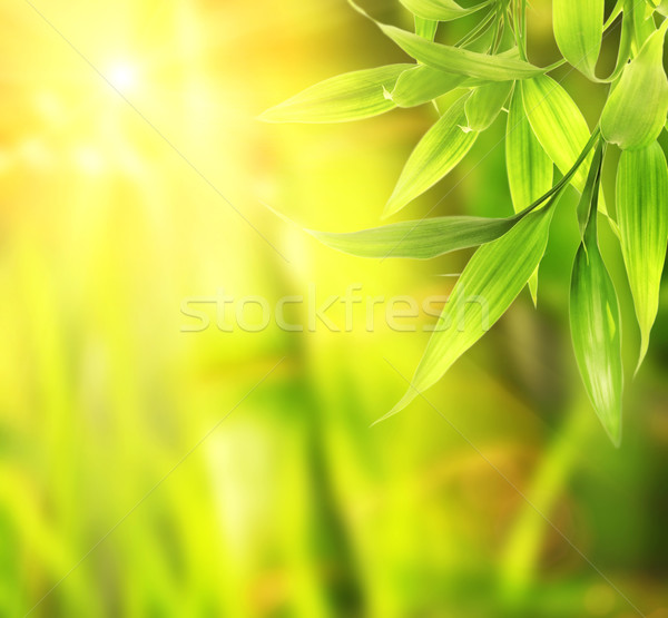 Picture of a green leaves over abstract blurred background Stock photo © Nejron