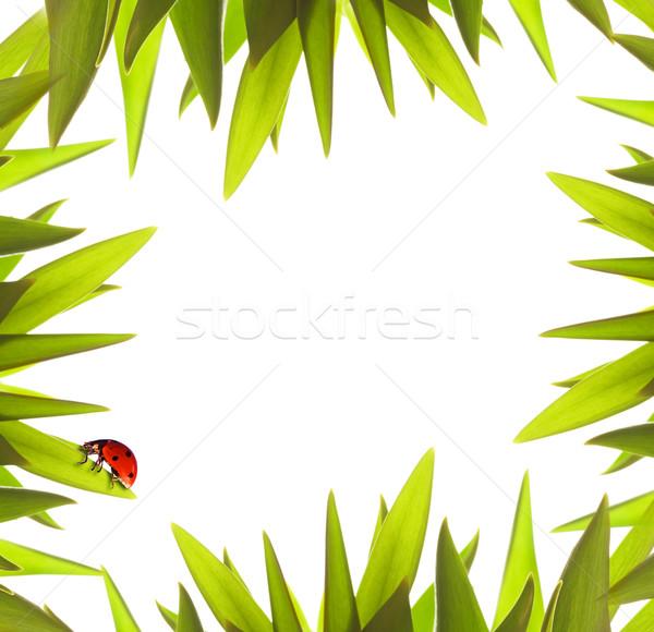 Stockfoto: Loof · grens · hemel · frame · zomer · Rood