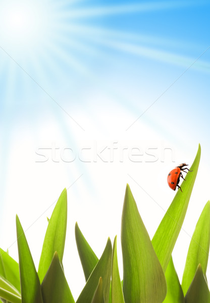Summer scenic Stock photo © Nejron