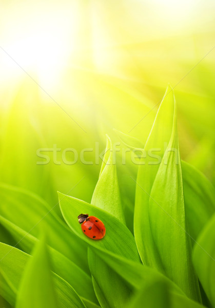 Katicabogár ül friss zöld fű tavasz fű Stock fotó © Nejron