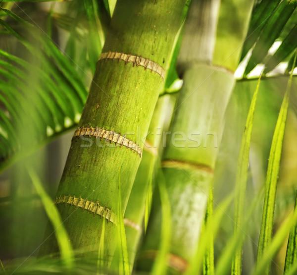 Verde impianto primo piano albero foresta abstract Foto d'archivio © Nejron