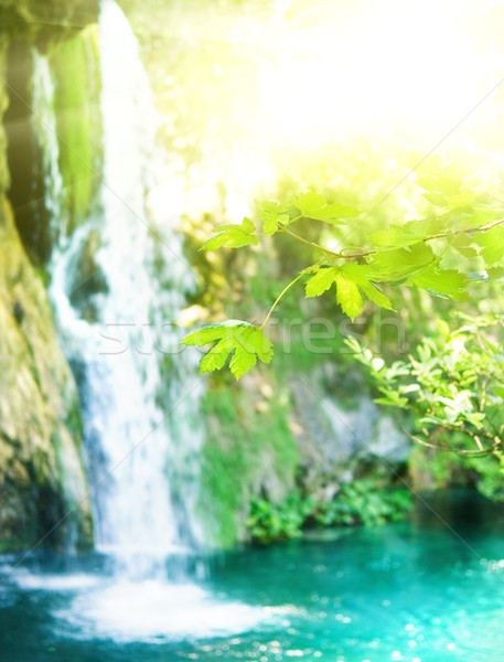 Waterfall in a forest (shallow DoF, focus on a leaves in foregro Stock photo © Nejron