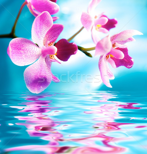 Beautiful orchid flowers reflected in water Stock photo © Nejron