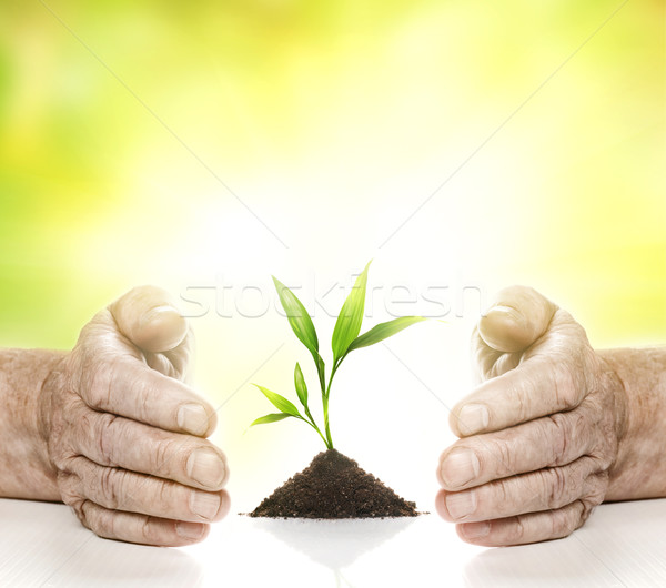 Old hands and young plant between them Stock photo © Nejron