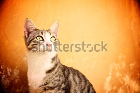 Cat against abstract background Stock photo © Nejron