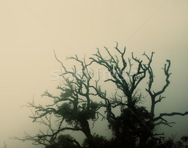 Foto stock: Velho · assustador · árvore · natureza · luz · fundo