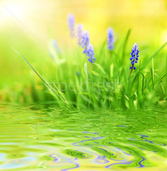 Paars bloemen gerenderd water zon natuur Stockfoto © Nejron