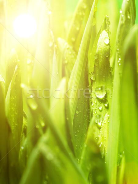Fresh green grass Stock photo © Nejron