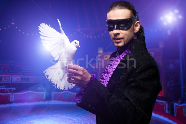 Young handsome brunette magician man in stage costume with his trained white dove on circus arena Stock photo © Nejron