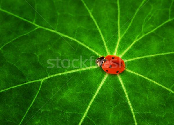 Uğur böceği oturma yeşil yaprak arka plan yaz yeşil Stok fotoğraf © Nejron