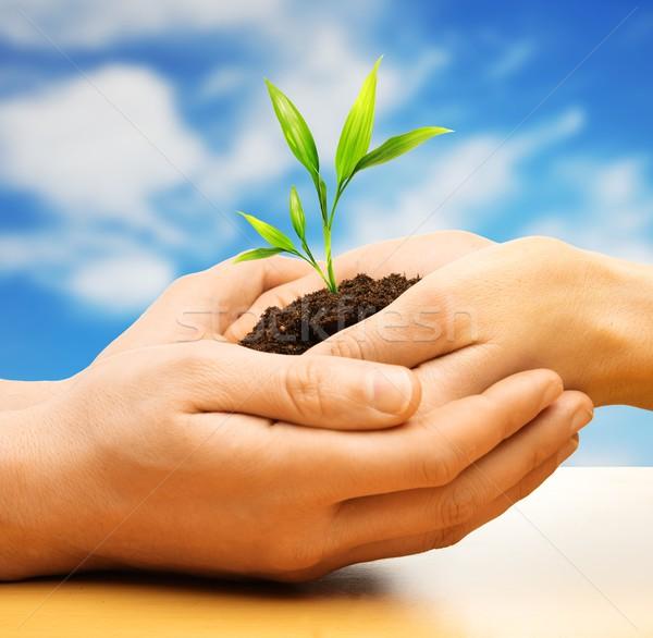 ストックフォト: 人間 · 手 · 地球 · 工場 · 芽