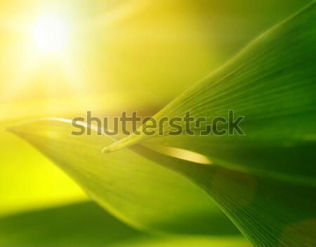 Stock photo: Fresh green grass (shallow DoF)