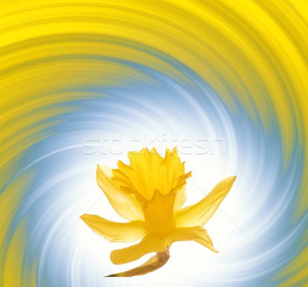желтый цветок аннотация весны природы фон лет Сток-фото © Nejron