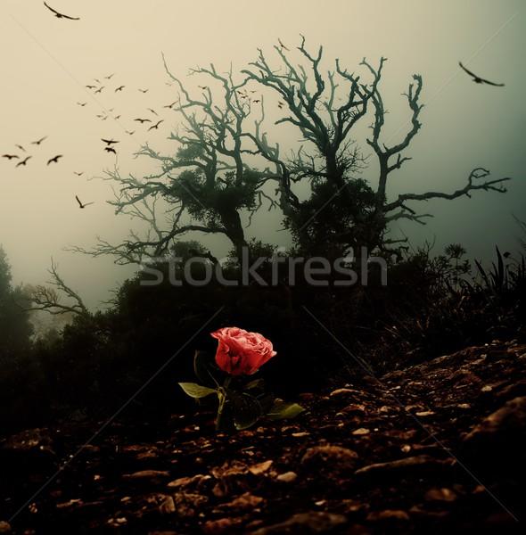 Foto stock: Rosa · vermelha · crescente · solo · assustador · árvore · natureza