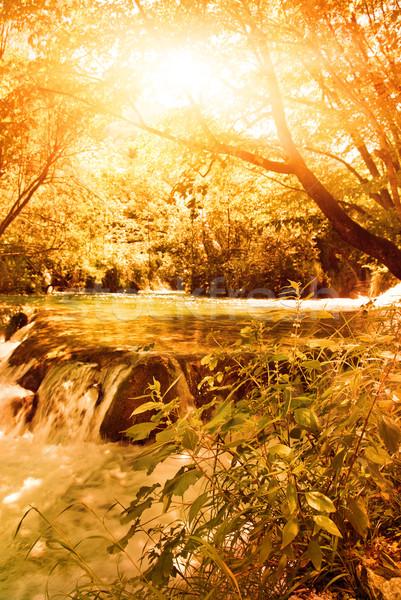 Sunshine in an autumn forest Stock photo © Nejron