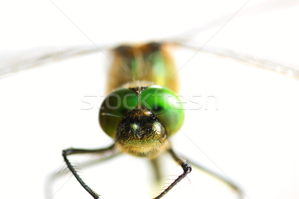 Dragonfly close-up isolated on white (shallow DoF) Stock photo © Nejron