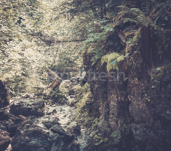 Stock photo: Stream in a mountain forest