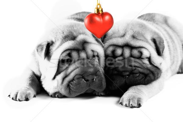 Dois sharpei filhotes de cachorro amor textura preto Foto stock © Nejron