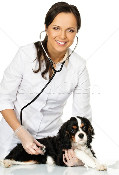 Stock photo: Young positive brunette veterinary woman holding spaniel with wounded leg