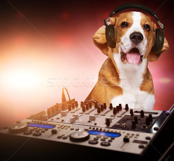 Beagle hond hoofdtelefoon achter mixer Stockfoto © Nejron
