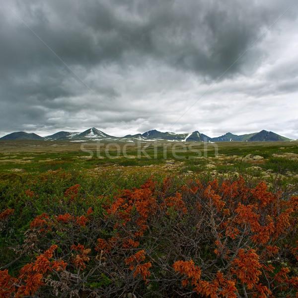 Planten vallei hemel bloemen wolken gras Stockfoto © Nejron