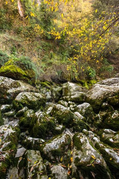 Stock photo: View of moss-grown rocks
