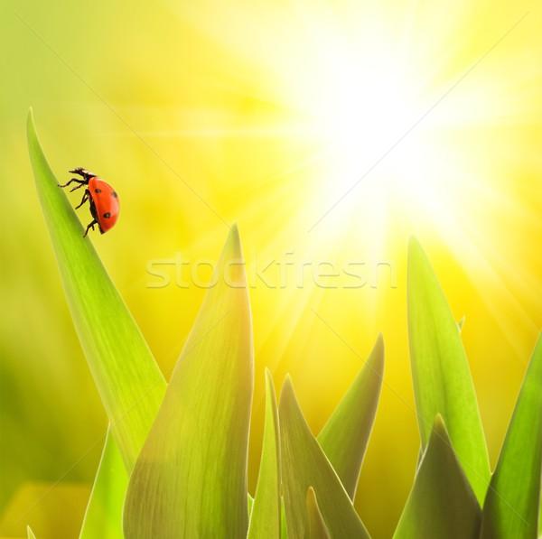 Ladybug сидят зеленая трава лист фон лет Сток-фото © Nejron