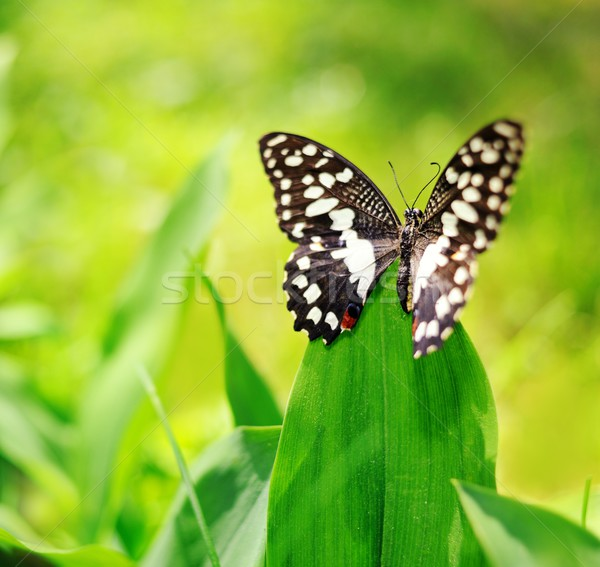 Beautiful butterfly on a green leaf Stock photo © Nejron