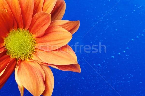Belo laranja flor água textura primavera Foto stock © Nejron