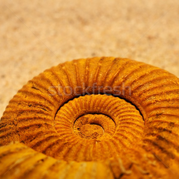 Antique snail shell close-up. Stock photo © Nejron