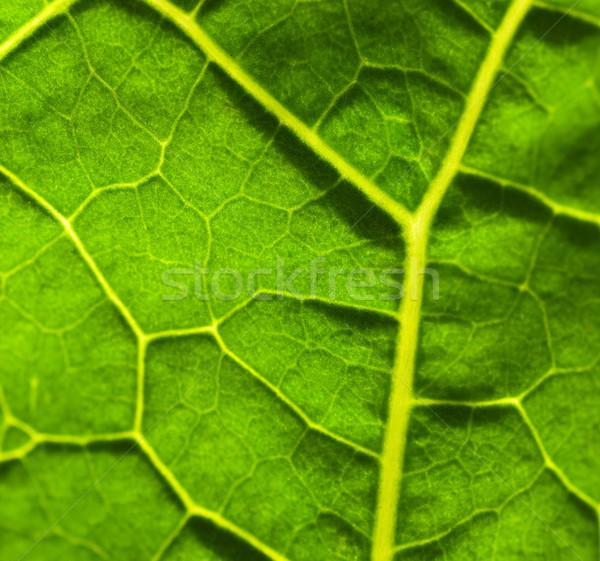 Green leaf texture Stock photo © Nejron