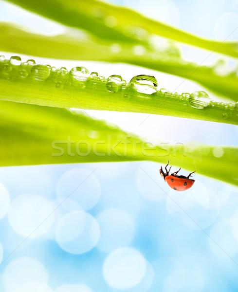 Joaninha grama verde água primavera grama fundo Foto stock © Nejron