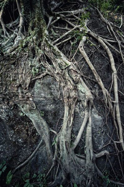 Antigua raíz naturaleza fondo verde plantas Foto stock © Nejron