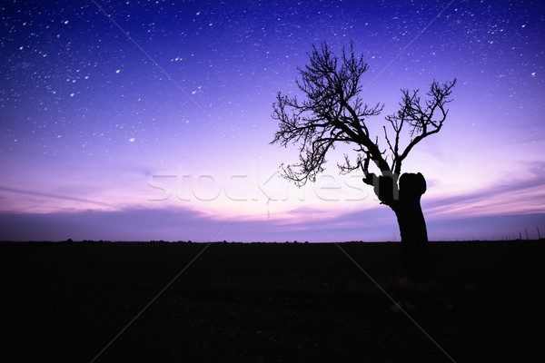 Starry sky over lonely tree silhouette Stock photo © Nejron