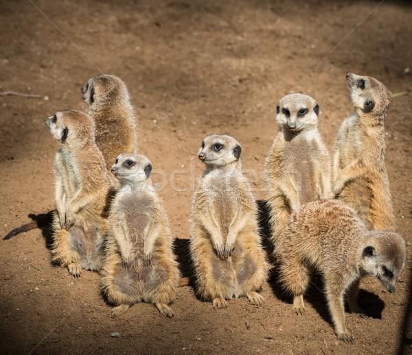 Clã belo cara grupo boca África Foto stock © Nejron