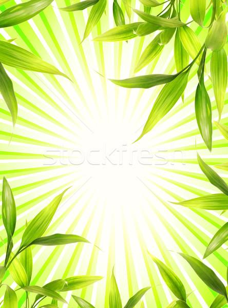 Bambu bitki çerçeve soyut yeşil ağaç Stok fotoğraf © Nejron