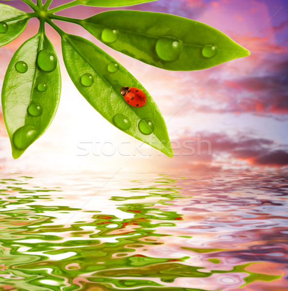 Joaninha sessão folha verde céu primavera jardim Foto stock © Nejron
