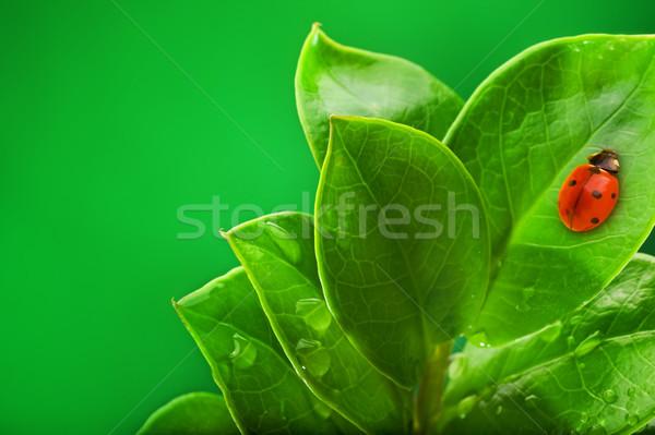 Uğur böceği oturma yeşil yaprak çim doğa arka plan Stok fotoğraf © Nejron
