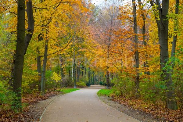 Beautiful autumn park in Berlin, Germany Stock photo © Nejron